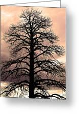 Tree Silhouette Greeting Card