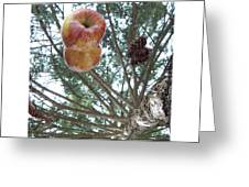 Tree Spiral Greeting Card