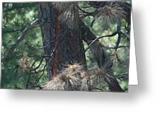 Tree Struck By Lightning Greeting Card