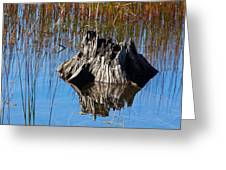Tree Stump And Reeds Greeting Card