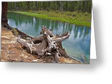 Tree Stump In Des Chutes Nf-or Greeting Card