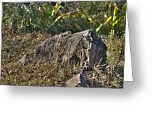 Tree Stump Greeting Card