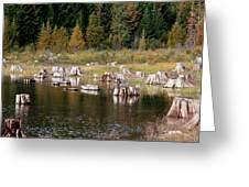 Tree Stumps At Clear Lake Greeting Card