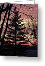 Tree Sunset Greeting Card
