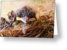Tree Swallow Fledglings Greeting Card
