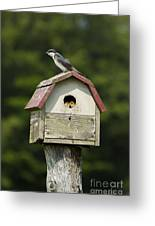 Tree Swallow With Young Greeting Card