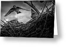 Tree Swallows In Nest Greeting Card