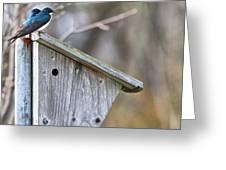 Tree Swallows On Birdhouse Greeting Card