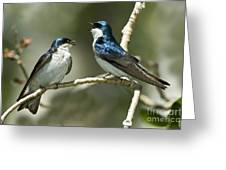 Tree Swallows Singing Greeting Card