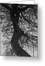 Tree Tangle Greeting Card