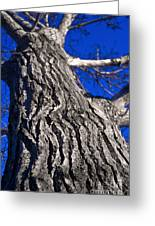 Tree Texture Greeting Card