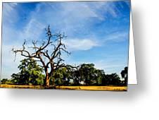 Tree Timestack Greeting Card