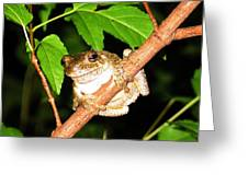 Tree Toad Night Greeting Card by Tamara Stickler