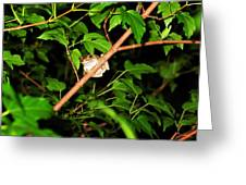 Tree Toad Greeting Card