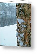 Tree Trunk Bark And River In Snowfall Greeting Card
