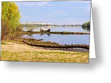 Tree Trunk By The River Greeting Card