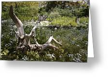 Tree Trunk In The Meadow Greeting Card
