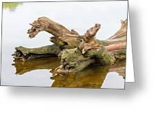 Tree Trunk In Water Greeting Card