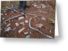 Tree Trunk Roots And Rocks Greeting Card