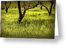 Tree Trunks In A Peach Orchard Greeting Card