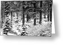 Tree Trunks Greeting Card