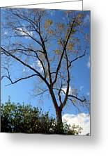 Tree Under Blue Sky Greeting Card
