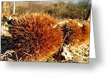 Tree Urchin Greeting Card