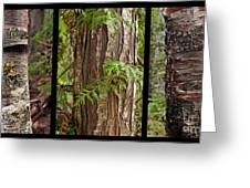 Tree Wear By Nature Greeting Card