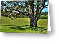 Tree With A Swing Greeting Card