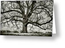 Tree With Bench Greeting Card by Greg Ahrens