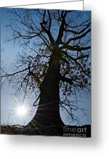 Tree With Sun Greeting Card
