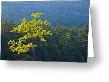 Tree With Yellow Leaves In Acadia National Park Greeting Card