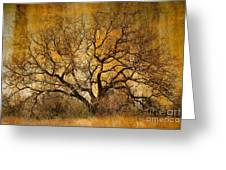 Tree Without Shade Greeting Card