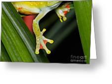 Treefrog Foot Greeting Card