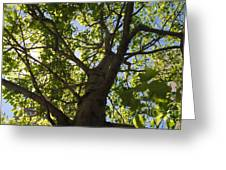 Trees 001 Greeting Card