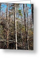 Entanglements Greeting Card