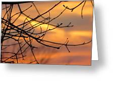 Trees Ablaze In Autumn Greeting Card