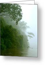 Trees Along The Boumba River Greeting Card