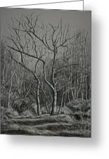 Trees Along The Greenway Greeting Card by Janet Felts