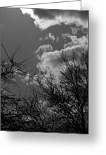 Trees And Clouds 3 Bw Greeting Card