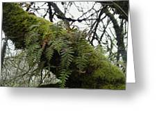 Trees And Ferns And Moss Ecosystem Greeting Card by Lizbeth Bostrom