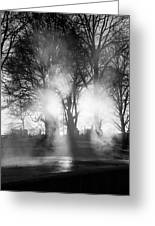 Trees And Fog Greeting Card