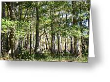Trees And Knees Greeting Card