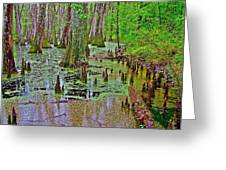 Trees And Knees In Tupelo/cypress Swamp At Mile 122 Of Natchez Trace Parkway-mississippi Greeting Card