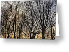 Trees And Late Afternoon Light Greeting Card