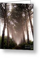Trees And Mist Greeting Card