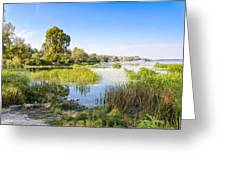 Trees And Reeds Close To The River Greeting Card