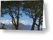 Trees And Snow-capped Mountain Greeting Card