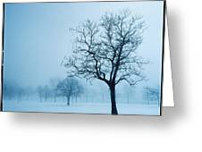 Trees And Snow In Fog, Toronto, Ontario Greeting Card