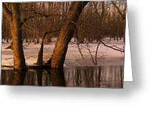 Trees At Collins Creek Greeting Card